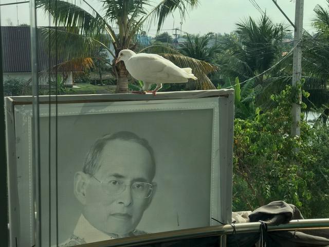 しわわせの白い鳩